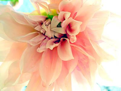 Blushing Peach Chiffon No.2 Poster by Christine Belt