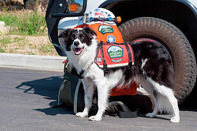 Border Collie Search And Rescue Dog (mr Poster