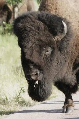 Buffalo Painterly Poster by Ernie Echols