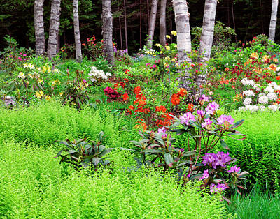Canada, New Brunswick, Garden And Forest Poster by Jaynes Gallery