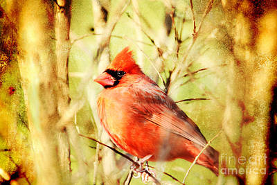 Poster featuring the photograph Cardinal by Trina  Ansel