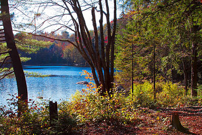 Cary Lake In The Adirondacks Poster by David Patterson