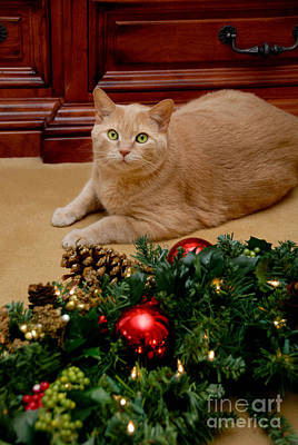 Cat And Christmas Wreath Poster by Amy Cicconi