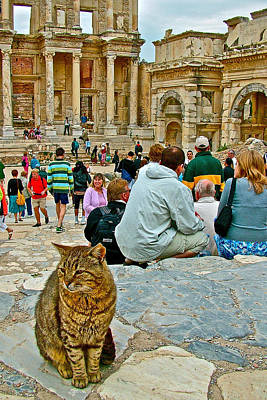 Cat Near Library Of Celsus In Ephesus-turkey Poster by Ruth Hager