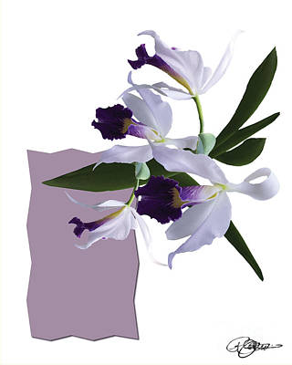 Cattleya Valentine Triage Dafoi Art 3 Of 3 Poster by Ruth  Benoit