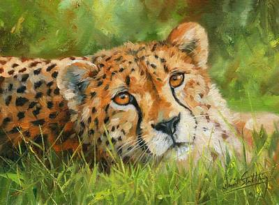 Cheetah Poster by David Stribbling