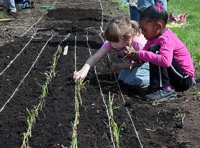 Children At Work In A Community Garden Poster