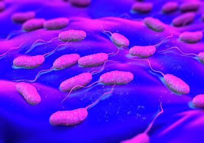 Cholera Bacteria Poster by Science Artwork