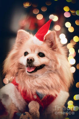 Christmas Dog Poster by Charline Xia