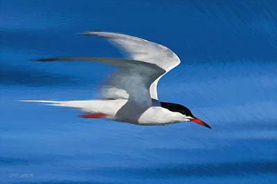 Common Tern Poster by Avi Meir
