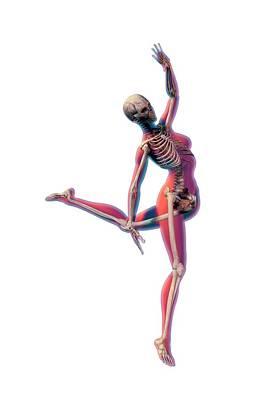 Dancer's Skeleton Poster by Carol & Mike Werner