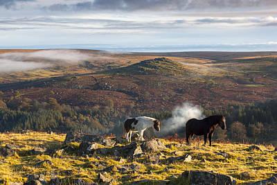 Dartmoor Pony Poster by Sebastian Wasek