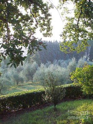 Dawn In Loppiano Poster