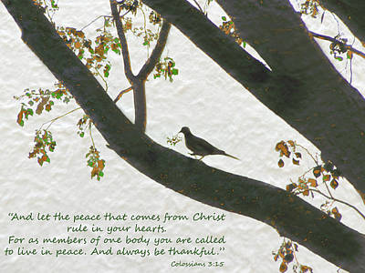 Dove Silhouette On Tree Poster