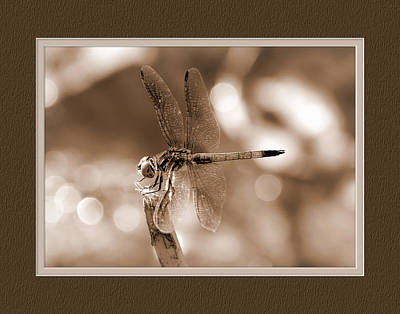 Dragonfly Elegance Poster by Charles Feagans