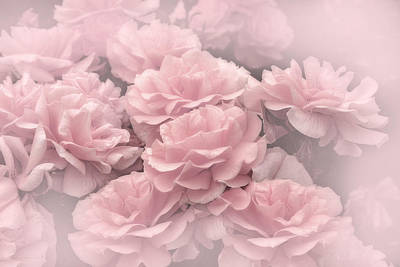 Dreaming Of Pink Roses Poster by Jennie Marie Schell