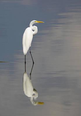 Egret Standing Poster