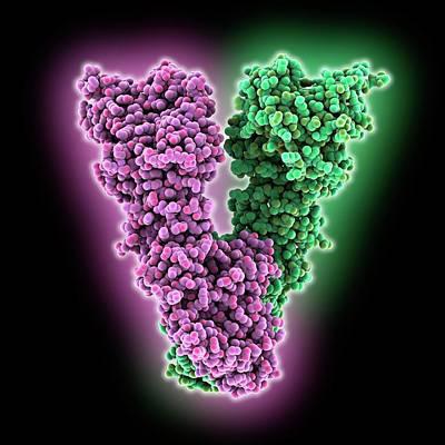Endoplasmic Reticulum Chaperone Protein Poster by Laguna Design