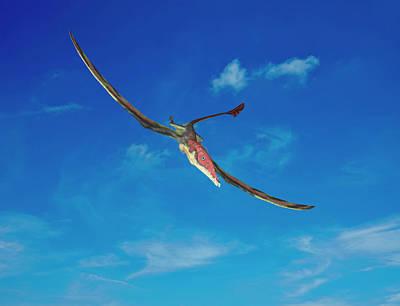 Eudimorphodon Pterosaur Poster