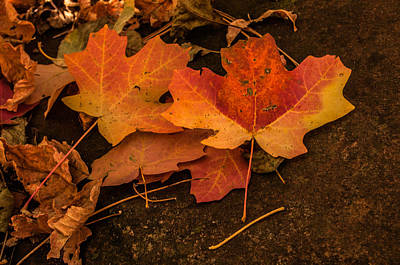 West Fork Fallen Leaves Poster