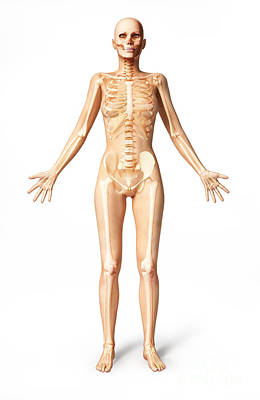Female Standing, With Skeletal Bones Poster
