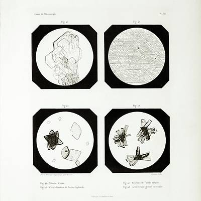 First Ever Photomicrographs Poster by British Library