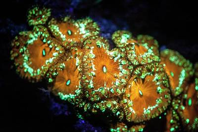Fluorescent Coral Poster