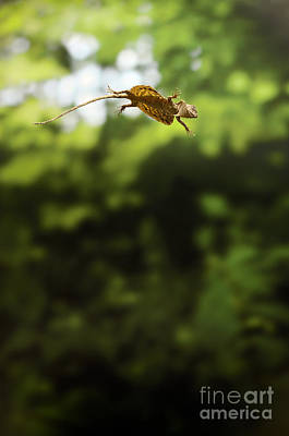 Flying Dragon In Flight Poster