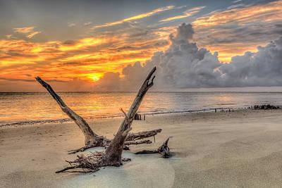 Folly Beach Driftwood Poster