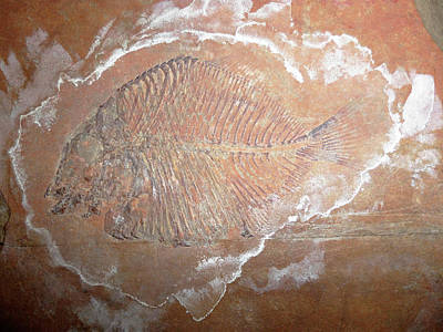 Fossil Fish Poster