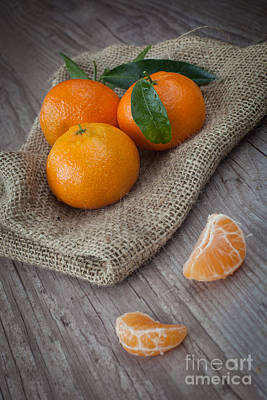 Fresh Tangerine Poster by Sabino Parente
