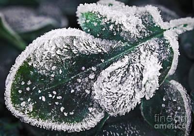 Frosty Leaf Poster by Elena Elisseeva
