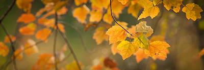 Golden Fall Leaves Poster