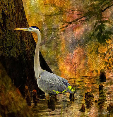 Great Blue Heron Slowly Fishing Poster by J Larry Walker
