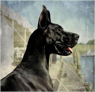 Great Dane Poster by Fran J Scott