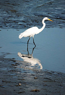 Great White Egret And Reflection Poster by Suzanne Gaff