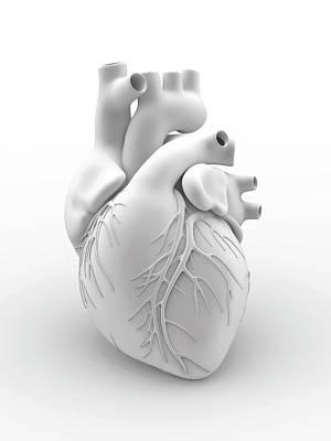 Heart And Coronary Arteries Poster