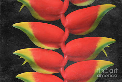 Heliconia Rostrata Poster by Sharon Mau