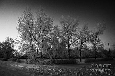 hoar frost covered trees on street in small rural village of Forget Saskatchewan Canada Poster