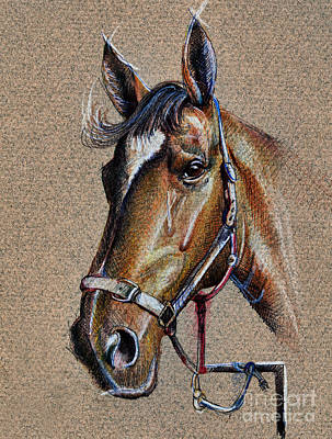 Horse Face - Drawing  Poster