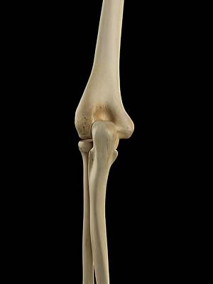 Human Elbow Joint Poster by Sciepro