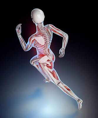 Human Skeletal Structure Of A Runner Poster
