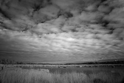 Infrared Picture Of The Nature Area Dwingelderveld In Netherlands Poster