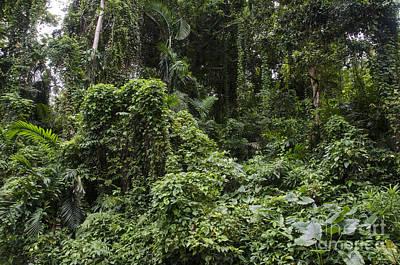 Jamaican Rainforest Poster by Mark Newman