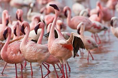 Kenya, Lake Nakuru National Park Poster by Jaynes Gallery