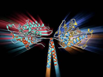 Kinesin Motor Protein Poster
