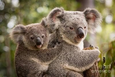 Koala And Joey Poster