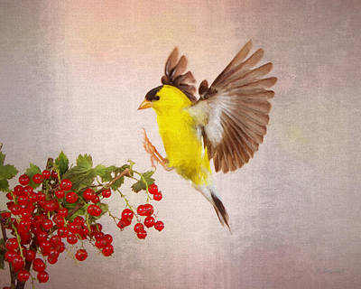 Landing For A Quick Charge At The Currant Bush Poster by Gerry Sibell