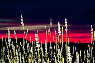 Lavender Sunset Poster by Mavis Reid Nugent