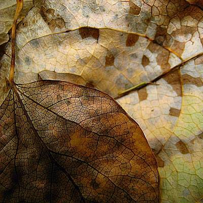 Leaf Patterns Poster by Shirley Sirois